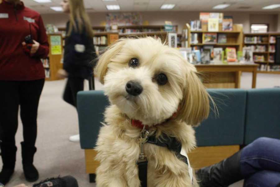 Furry friends relieve finals stress: Photo Gallery